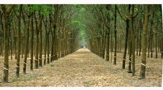 How the tree plantation in Bangladesh can make you multi
